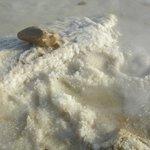 The salt at the seashore