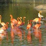 Beautiful flamingos in Orange