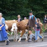 Walking the Cow Herd throught Berchtesgaden