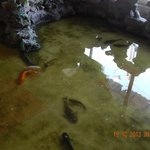 Fish near the reception