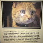 Jack Cat - Description