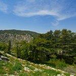 Tannourine Cedars Reserve