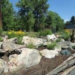 Rock Garden2