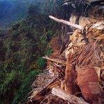 Museumsfoto einer Original-Fundstätte an den Lagunas del Condor