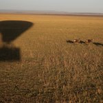 Shadow and gnus