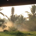 The rice paddy next to the villa in the early mist