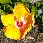 fioritura autunnale