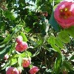 Amazing vines and garden