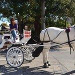 Cyndi & Boomer, Amelia Island Carriages