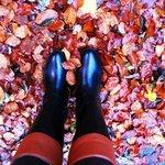 Castillo Doune en otoño