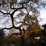 Safari Park Hotel  |  Thika Road, Kasarani , Nairobi, Kenya
