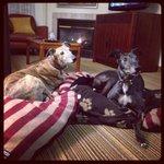 Hotel dog friendly!