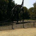 structure impressionnante de dinosaure