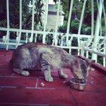 Коты на балконе