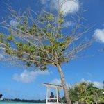 awesom tree