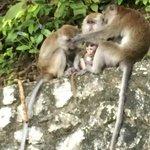 La famille Macaque au complet