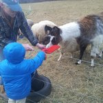 Feeding the llama