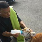 bottle feeding a tiger cub