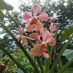 some of the beautiful orchids found in its tranquil garden