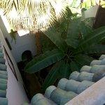 Le palmier pour l'exotisme