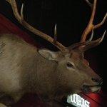Deco Deer