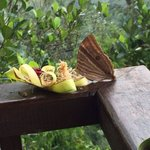 Butterfly on Bali offering in resort