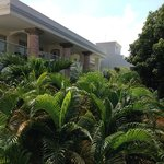 Jardin frondoso espectacular.