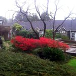The courtyard and Koi pond