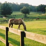 Retirement Home For Horses at Mill Creek Farm