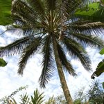 Palm tree paradise - in the grounds