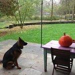 the orange ball looks good!