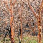 Tomaree NP, after recent bushfire