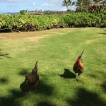 grassy area by beach with ubiquitous chickens