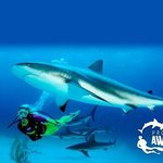 As part of PADI's 100% AWARE program we donate $10 on behalf of every student to projects