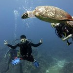 Swimming with turtles!!