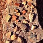 Homolovi State Park - Pottery sherds