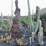 cactus da tutto il mondo