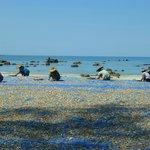 Village pêcheurs séchage poisson