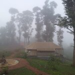 Morning Mist in Wayanad  - Whispering Woods