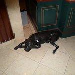 Este cachorro ficam bem na entrada do hotel