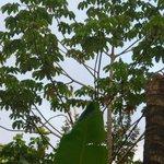 Dans le jardin du Phidjie Lodge un toucan