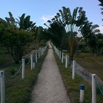 The path to the bungalows and villas