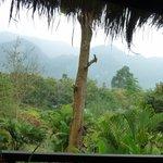 la jungle partout autour