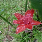 merveilleuse rose de porcelaine