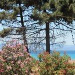 widok z ogrodu na plażę