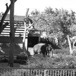 Elefanten Außengehege bw