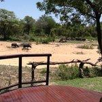 Cape Buffaloes' spa day