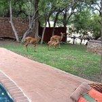 nyala family living on grounds of Shumbalala