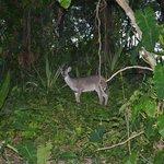 Random Deer