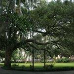 Forsyth Park trees